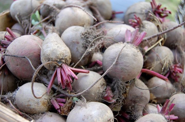 9-21-13 beet it