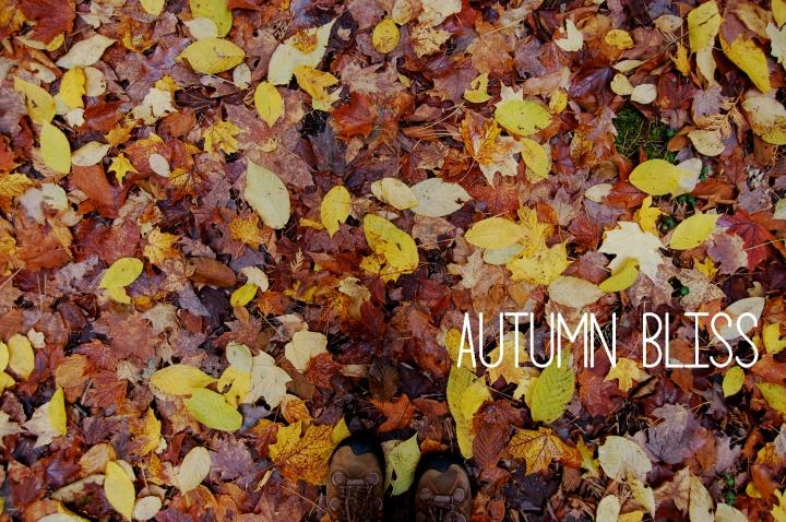 11-5-13 autumn bliss