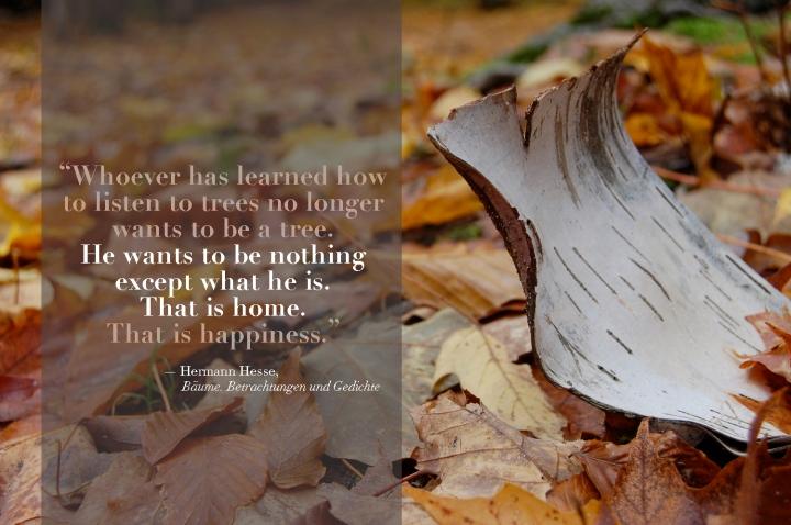 11-5-13 birch strip quote