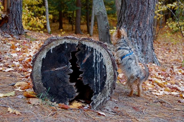 11-5-13 dog log