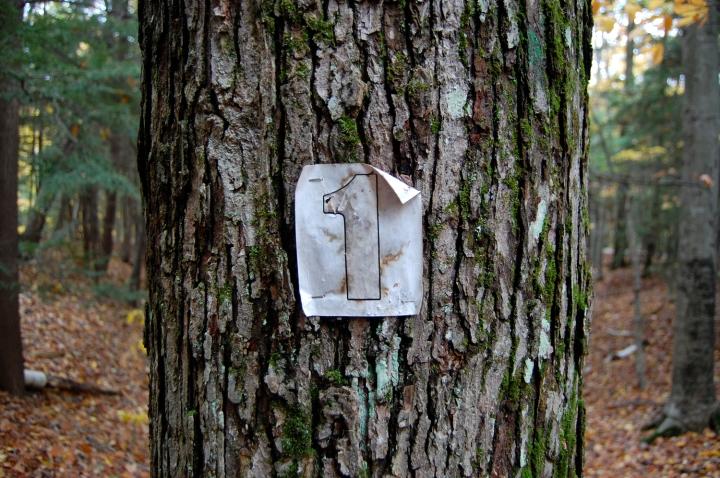 11-5-13 number 1 tree