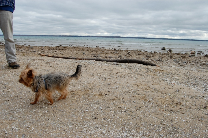 11-5-13 tanner on beach