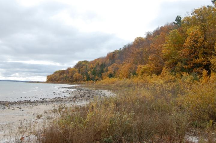 11-5-13 tree shore