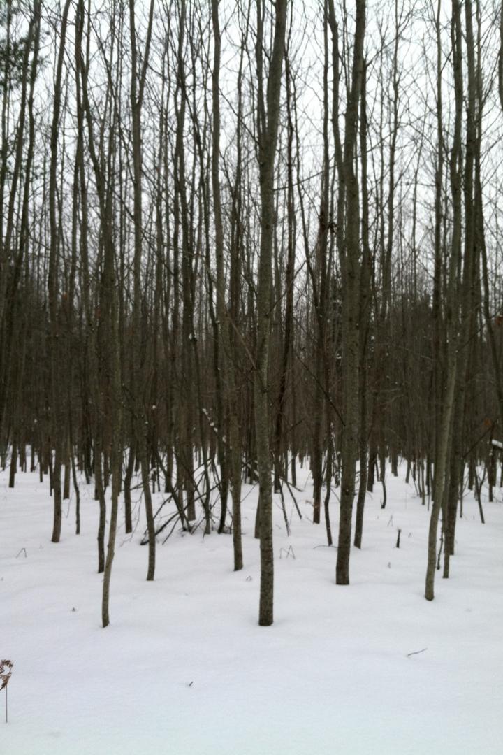 12-16-13 vasa trees